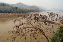 Mekong Kneipe #1