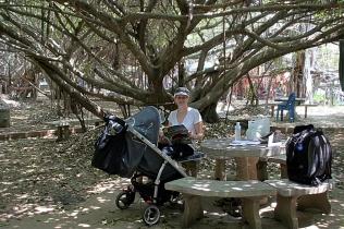 Unterm Banyan Tree