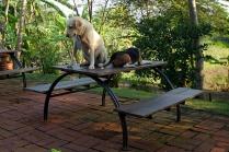 Die Krawattenhunde von Sa Kaeo