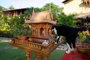 Mein neuer Roman: Die Katze im Geisterhaus