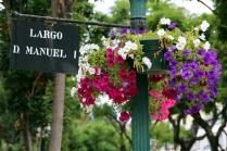 Blumen auf der Blumeninsel