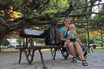 Die Zeder im Principe Real Park hat es sogar bis in den Reiseführer geschafft