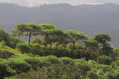 Dschungel de Monchique