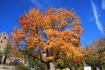 Hier ist der Herbst noch heimisch
