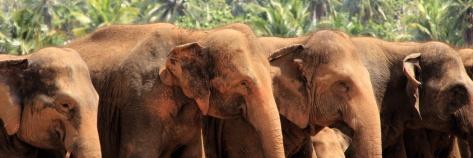 IMG_2603_elefanten_PANO