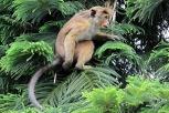 Spot the monkey