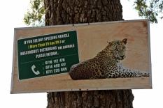 Mindestens einen Leopard sieht jeder...