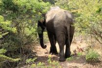 Freundlicher Elefant