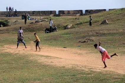 Cricket Nachwuchs