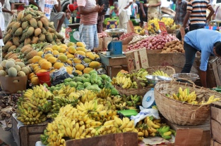 Paradies für Obstler