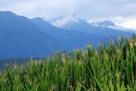 Grüne Bergwelt