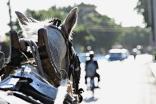 Aus der Pferdeperspektive