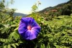 IMG_9895_flowerpower_MINI