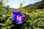Blüten wie in Asien!