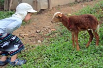 Schaf-Chat auf Augenhöhe