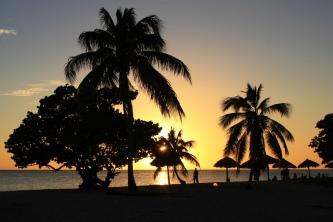 Palmenpanorama