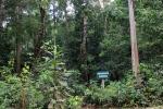 IMG_2997_pqforbiddenforest