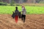 Feldbewirtschaftung Cambodian Style