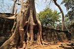 IMG_3845_tree+tree