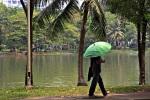 IMG_4614_umbrella
