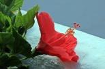 Auch im Süden gedeihen Blumen, fleißiges Gießen vorrausgesetzt