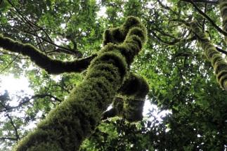 Hier werden also Plüschkratzbäume gezüchtet