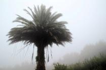 Auch die Palmen zeigen sich unbeeindruckt vom Wetter