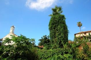 Grüner wirds nicht im Hinterhof