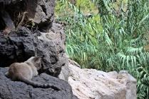 Hier wache ich - Securitas Katze am Eingang der Schlucht