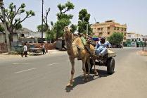 IMG_6230_camel_MINI