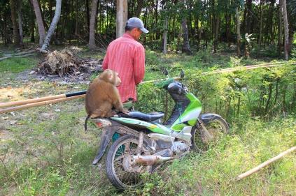 Affe bei der Arbeit