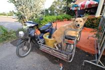 Tierische Mitfahrer #2