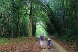 Unterwegs im Bambuswald