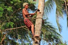 Professioneller Palmenfäller