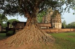 IMG_4463_tree_MINI