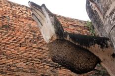 Auch Bienen lieben Buddha!