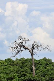 img_7942_tree_mini