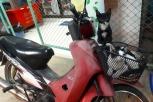 Die heimischen Katzen reisen lieber mit dem Roller
