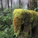 Ökofant